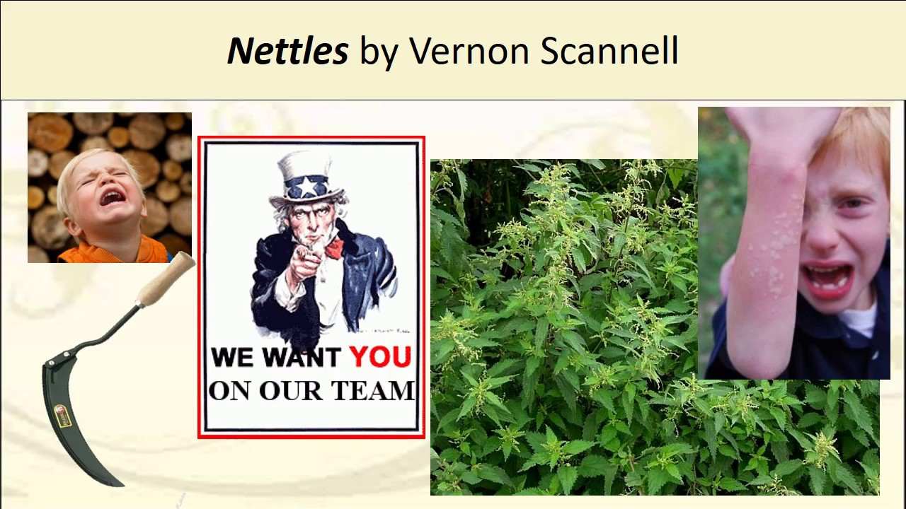 analysis of the poem nettles