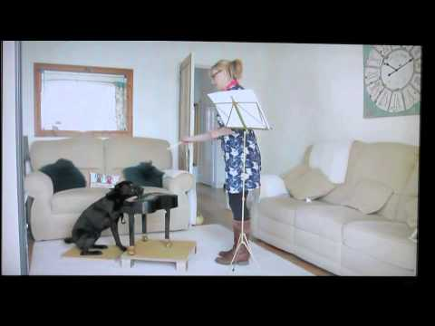 Harry The dog Playing a Piano - Appearing on Meridian TV