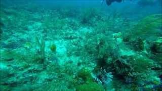 Bahamas Nassau Wall Dive