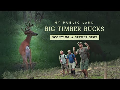 Preseason Scouting For Big Timber Bucks - MY SECRET SPOT - New York Public Land