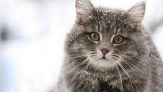 Мое слайд-шоу Кошки