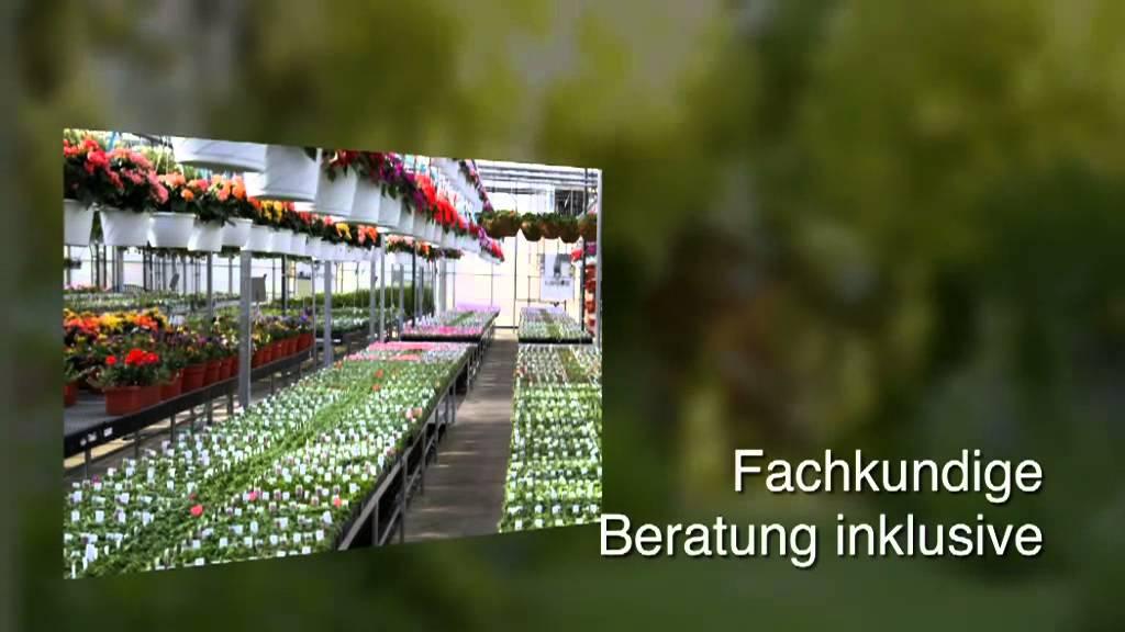 Bambus Darmstadt Bambus Baumschule Ulrich Willumeit Youtube