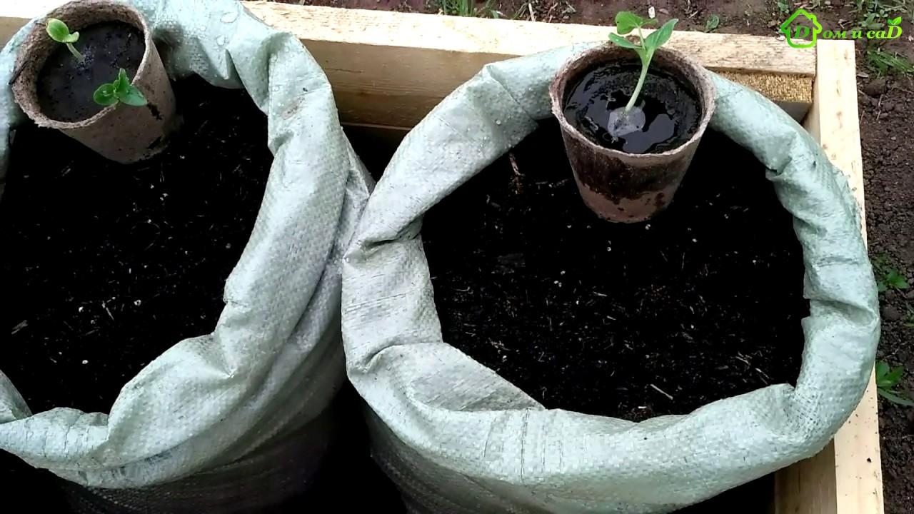 выращивание в пленочных мешках фото вёл разгульную жизнь