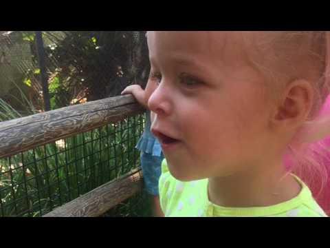 Trip to the Santa Ana Zoo