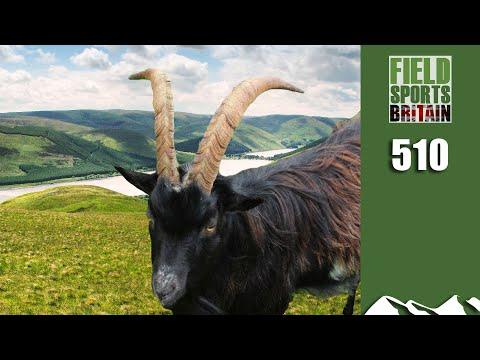Fieldsports Britain - Do Goats Float?
