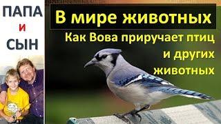 Как Вова приручает птиц и животных. #вмиреживотных Природа США Папа и Сын. Алексей и Вова Савченко.