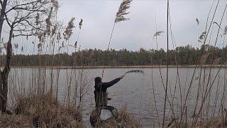 Охота за КАРПОМ на диком озере Рыбалка в мае