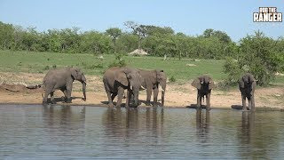Thirsty Elephant Bulls At South African Watering Hole