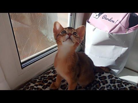 Вопрос: Почему кошек нельзя наказывать?