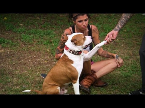 Tania and Perry Welcome a New Addition to the Family | Pit Bulls and Parolees