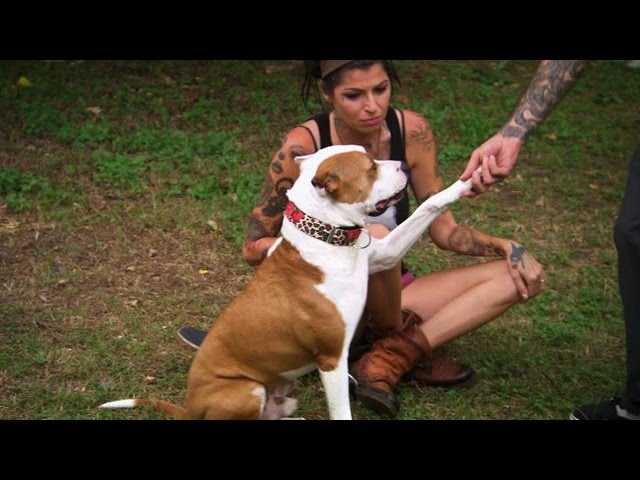 Tania And Perry Welcome A New Addition To The Family Pit Bulls And Parolees Youtube