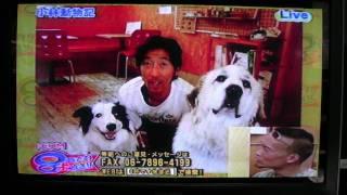 看板犬を務める笹と亜湖にオファーがやってきた!!!