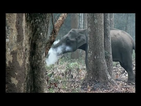 The Smoking Elephant