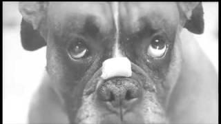 perro para nextel by madre