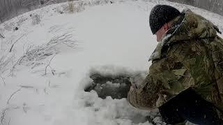 Зимняя,подлёдная охота на бобра с проходными капканами
