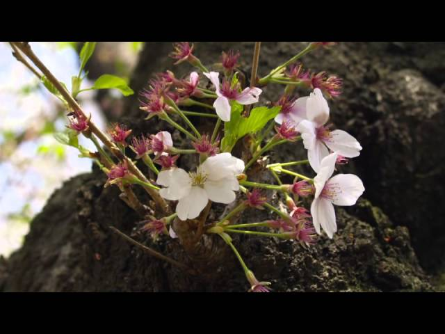 tokyo spring colors