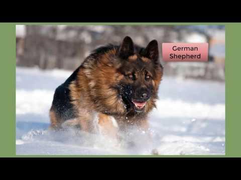 Top 10 Most Dangerous Dog Breeds 2017
