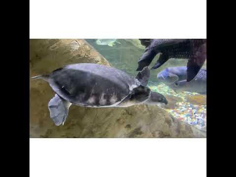 ലോകത്തിലെ ഏറ്റവും വലിയ അക്വാറിയം | World's Largest Aquarium & Under Water Zoo