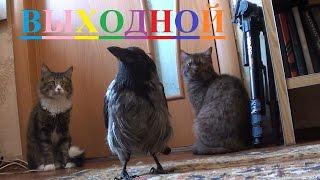 Выходной день у животных