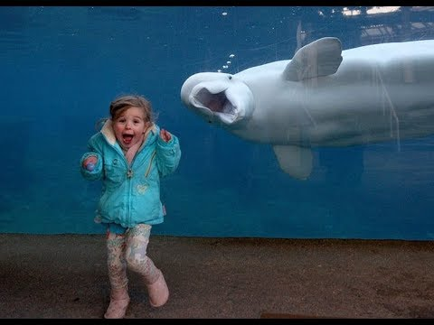 Kids and Animals at Zoo Have Fun Time Together –  Funny Baby Kid and Animal Compilation