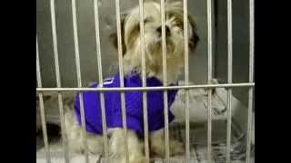 Dove - Mahoning County Dog Pound - Youngstown Ohio - November 11 2013