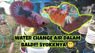 RUTIN LB WATERCHANGE AIR DALAM BALDI || REVIEW IKAN DARI DALAM BALDI