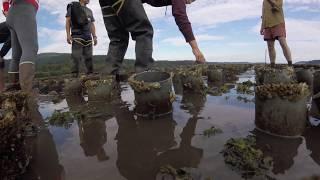 Geoduck Environmental Conditioning: FFAR 2018 Summary Video