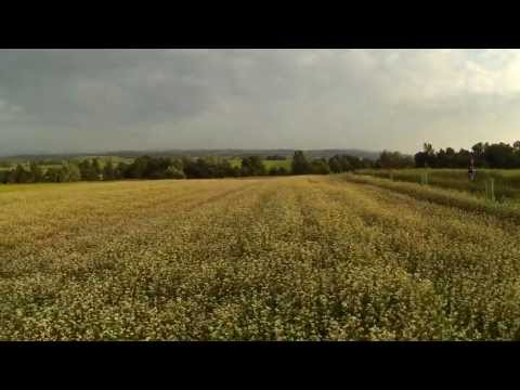15 minutes onboard quadcopter on Harfa Traw organic farm in Rożnowice (Poland)