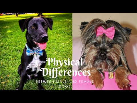 Physical Differences between male and female dogs