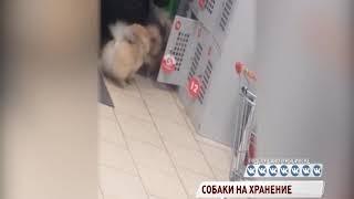 Жительница Рыбинска сдала шпицев в камеру хранения