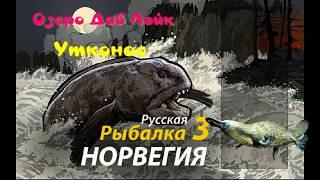 Качкодзьоб Рідкісні види риб Озеро Давши Лейк / РР3 [ Російська рибалка 3]