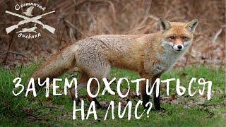 Зачем охотиться на лис?
