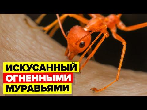 На мне кишели огненные муравьи, и я выжил (реальная история).