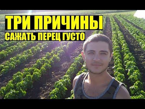 Почему сажаем перец так ГУСТО? и по два в одну лунку / Why do we plant pepper so THICKLY? (Eng sub) | болгарский | открытом | ласточка | теплица | сладкий | огороде | огород | грунте | перец | лунку