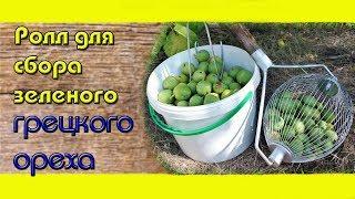 Домашний Ореховый Бизнес / Ролл для сбора зеленого ореха / Удаление околоплодника