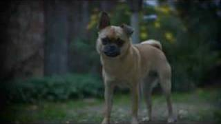 Snappy The Pug Pom Puppy Dog