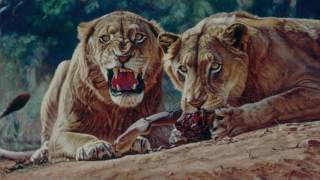 Download Video The Man-Eaters of Tsavo: The Ghost and The Darkness MP3 3GP MP4