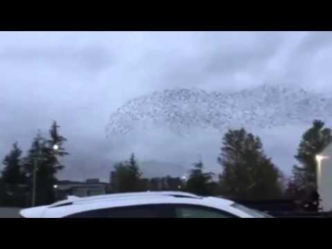 Mesmerizing footage of birds swirling in sky