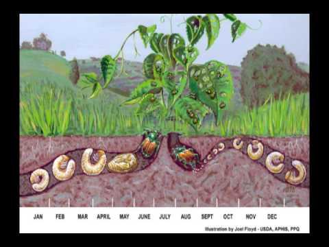 Edafolog a formacion del suelo youtube for Como se forma y desarrolla el suelo