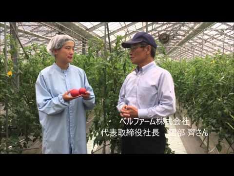 ベルファーム株式会社 菊川市 あかでみトマト