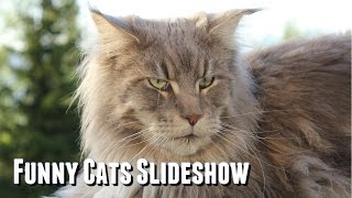 Maine Coon Cat Video - Maine Coon Slideshow of Varg & Mia