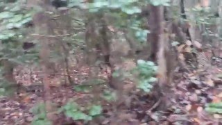 3 5 12 gauge mag shot gun on running deer buck ready for gun season 2017