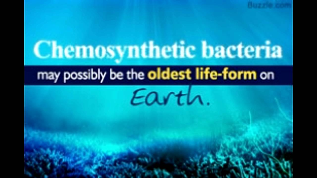 chemosynthesis Most life on earth is dependent upon photosynthesis, the process by which plants make energy from sunlight however, at hydrothermal vents in the deep.
