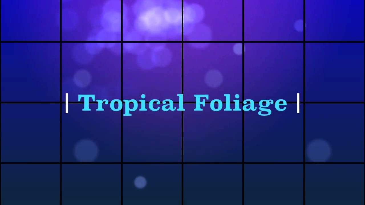Wholesale hawaiian tropical flowers youtube wholesale hawaiian tropical flowers izmirmasajfo