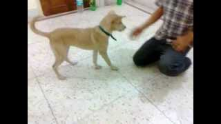 Trained street dog