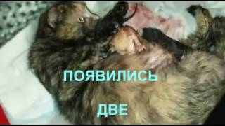 Сегодня наша спасённая кошечка родила 6 котят =)