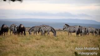 Masai Mara   Wildlife Safari in Masai Mara, Kenya   Travel Vlogs