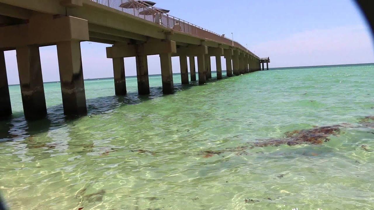 Shark, Sunny Isles beach South Florida