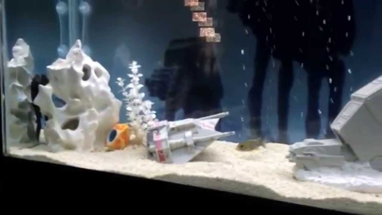 Star wars african cichlid fish tank youtube for Star wars fish