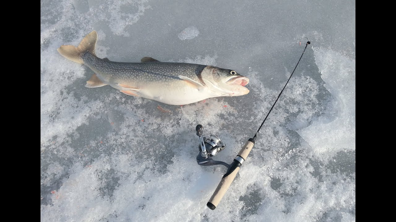 Two lake trout by long island lake george when ice for Lake trout ice fishing lures